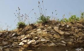 Oyster shell midden